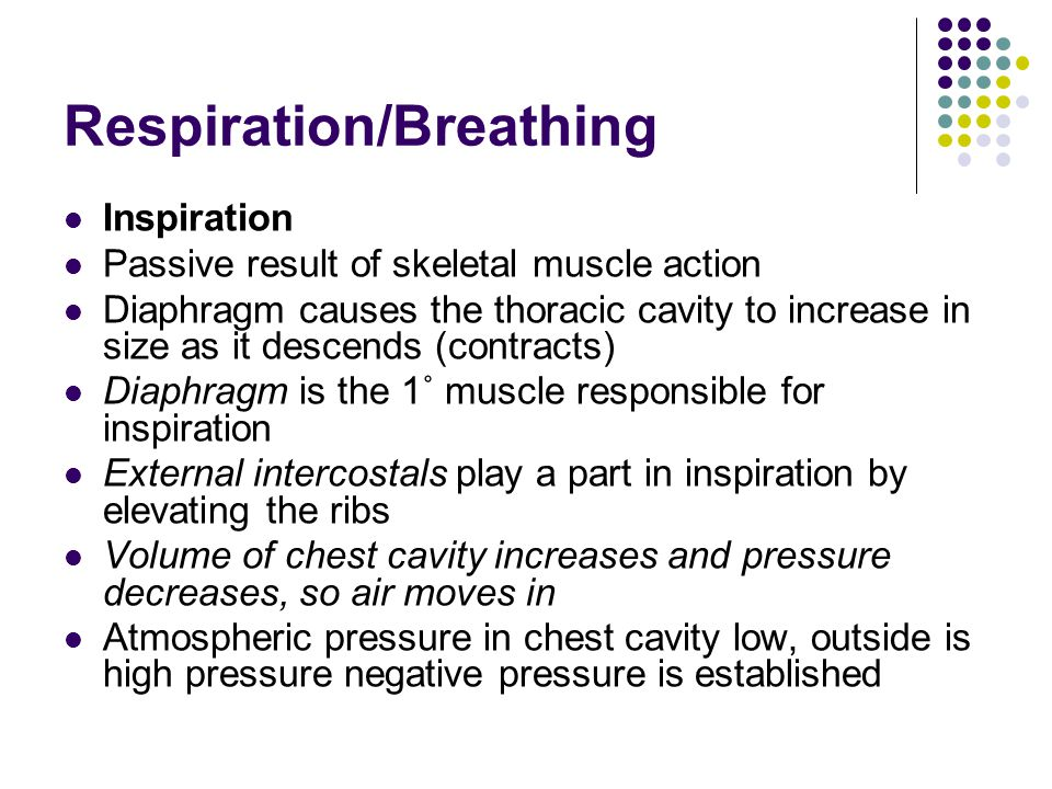 Respiration/Breathing