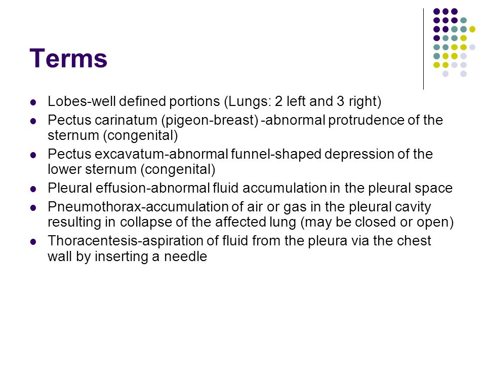 Terms Lobes-well defined portions (Lungs: 2 left and 3 right)