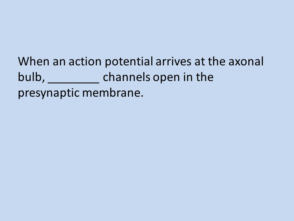 When an action potential arrives at the axonal bulb, ________ channels open in the presynaptic membrane.