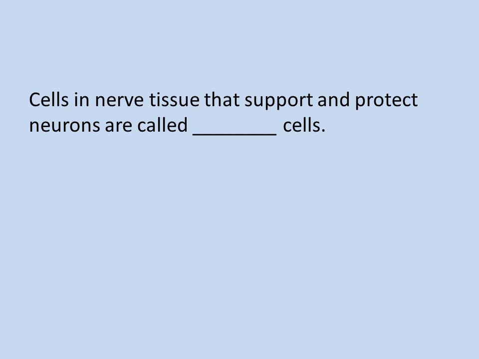 Cells in nerve tissue that support and protect neurons are called ________ cells.