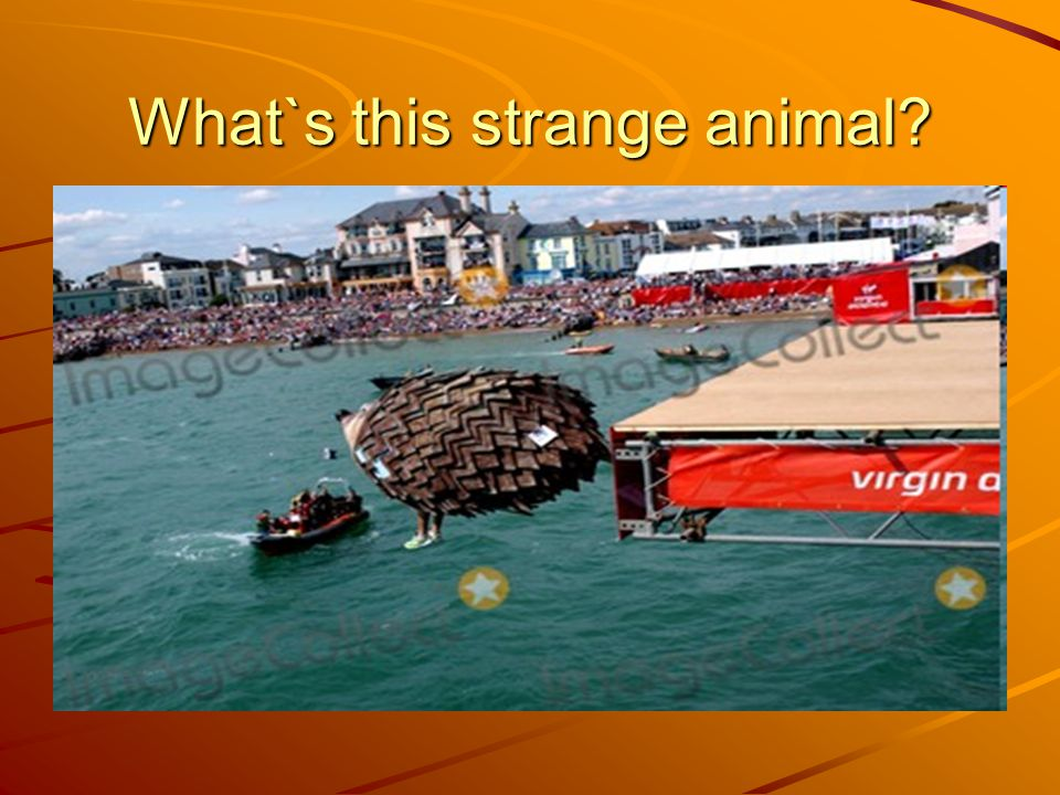 What`s this strange animal
