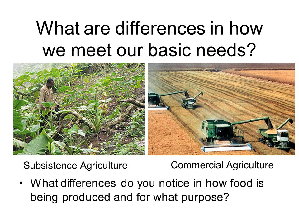 What are differences in how we meet our basic needs