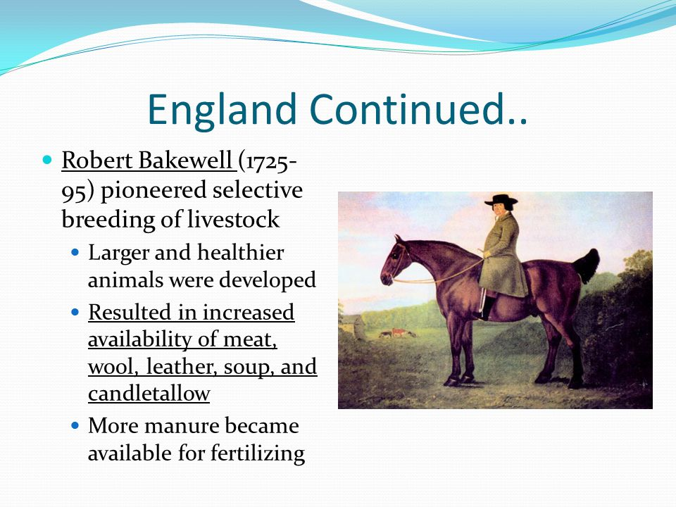 England Continued.. Robert Bakewell (1725-95) pioneered selective breeding of livestock. Larger and healthier animals were developed.