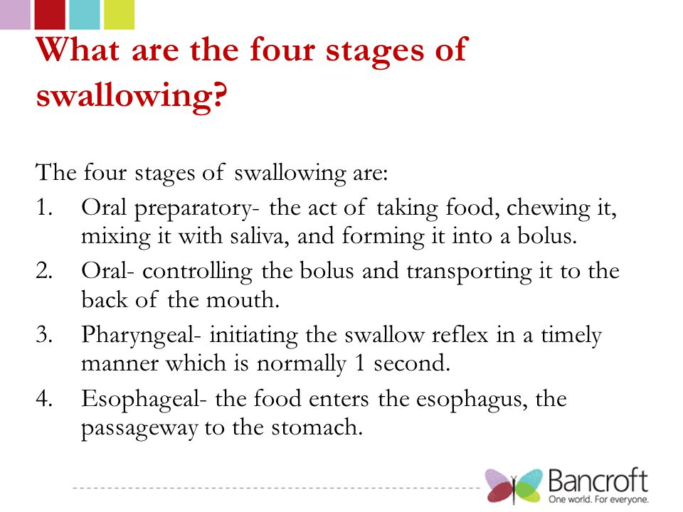 What are the four stages of swallowing