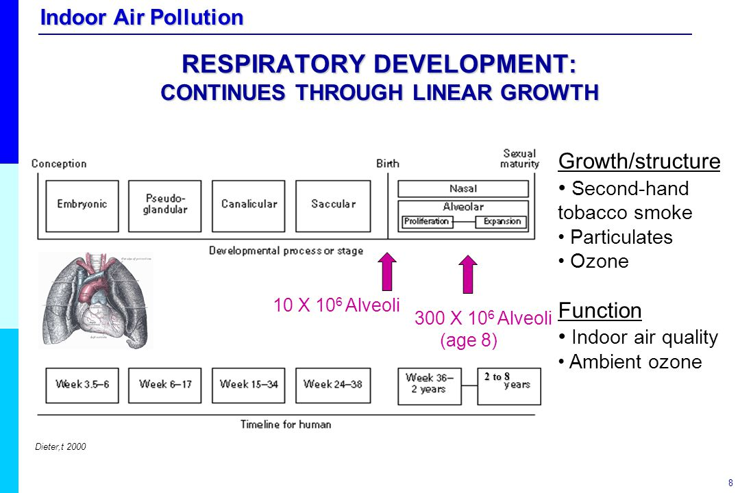 RESPIRATORY DEVELOPMENT: CONTINUES THROUGH LINEAR GROWTH