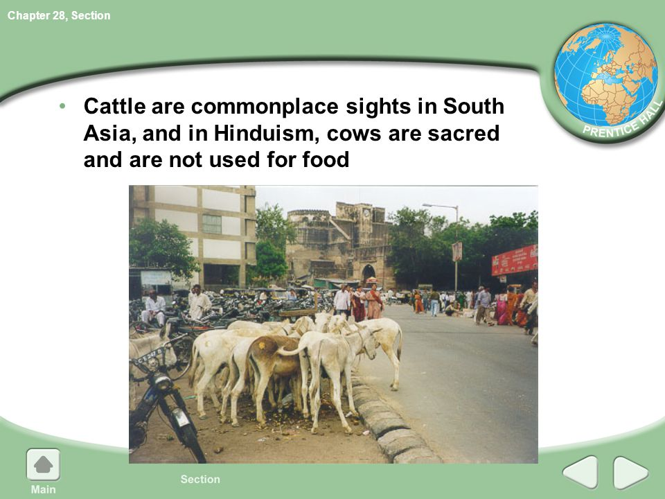 Cattle are commonplace sights in South Asia, and in Hinduism, cows are sacred and are not used for food
