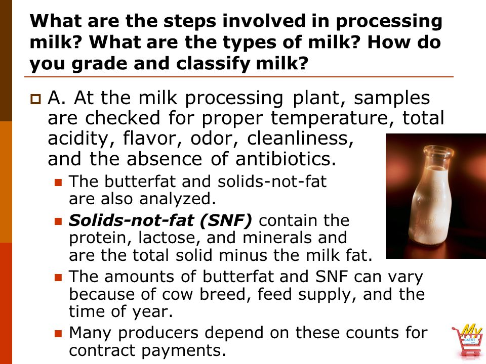 What are the steps involved in processing milk