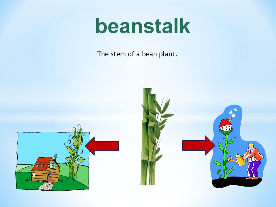 beanstalk The stem of a bean plant.