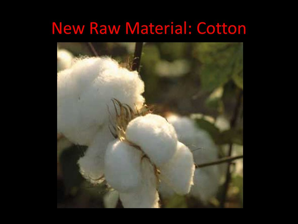 New Raw Material: Cotton