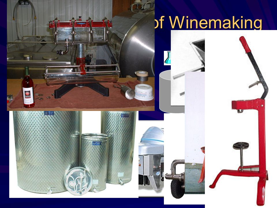 Process of Winemaking Fruit Delivery in crates Primary Fermentation