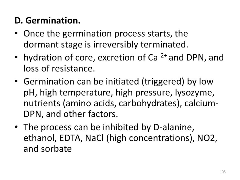 D. Germination. Once the germination process starts, the dormant stage is irreversibly terminated.