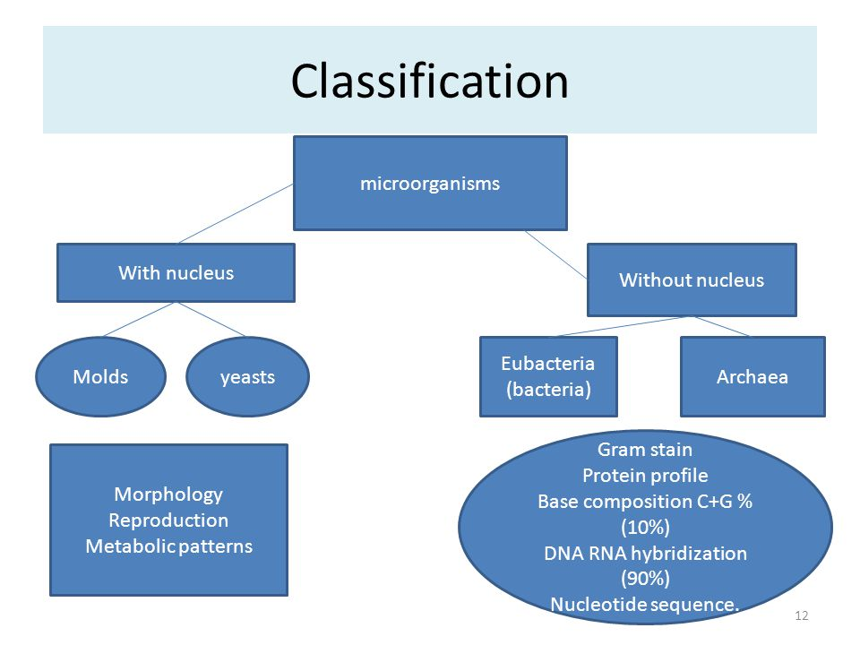 Classification microorganisms With nucleus Without nucleus Molds