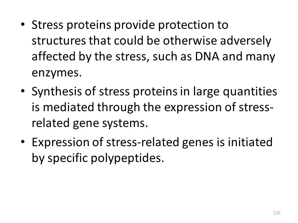 Stress proteins provide protection to structures that could be otherwise adversely affected by the stress, such as DNA and many enzymes.