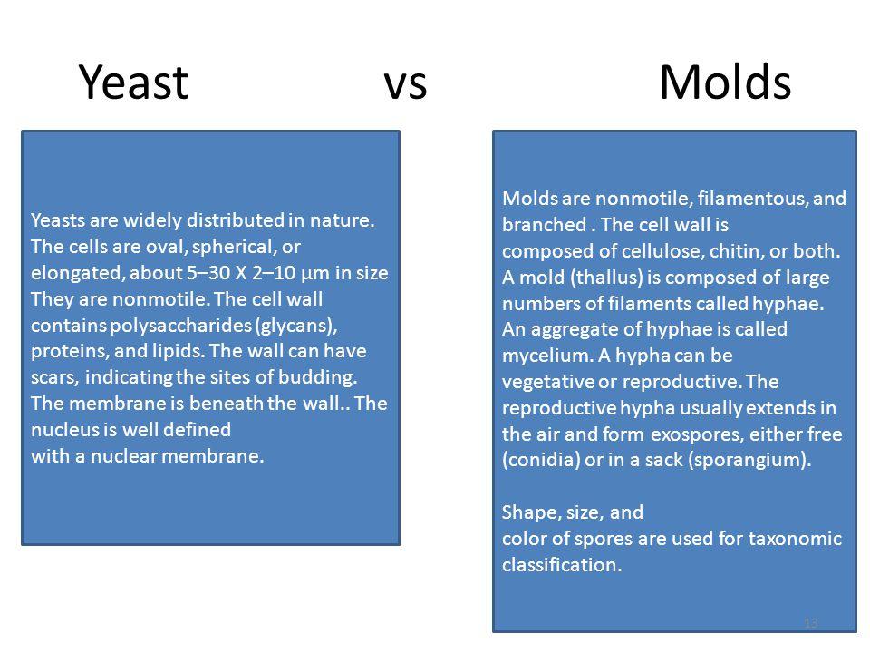 Yeast vs Molds