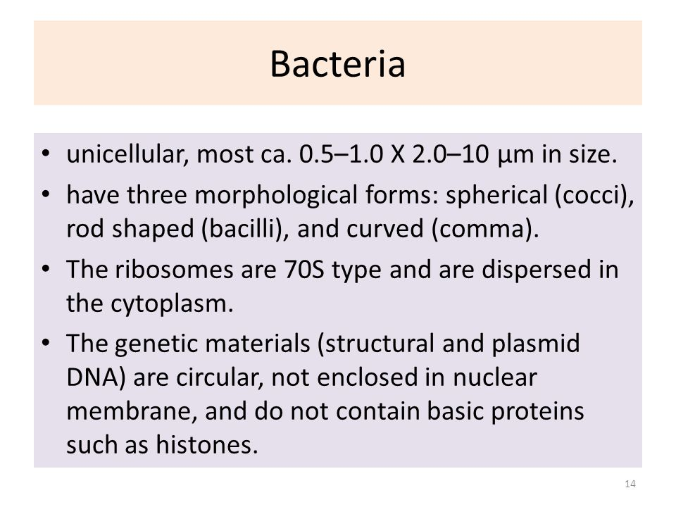 Bacteria unicellular, most ca. 0.5–1.0 X 2.0–10 µm in size.