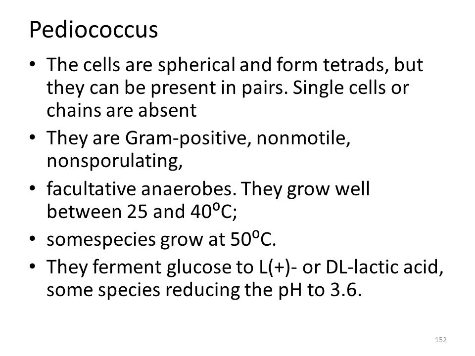 Pediococcus The cells are spherical and form tetrads, but they can be present in pairs. Single cells or chains are absent.