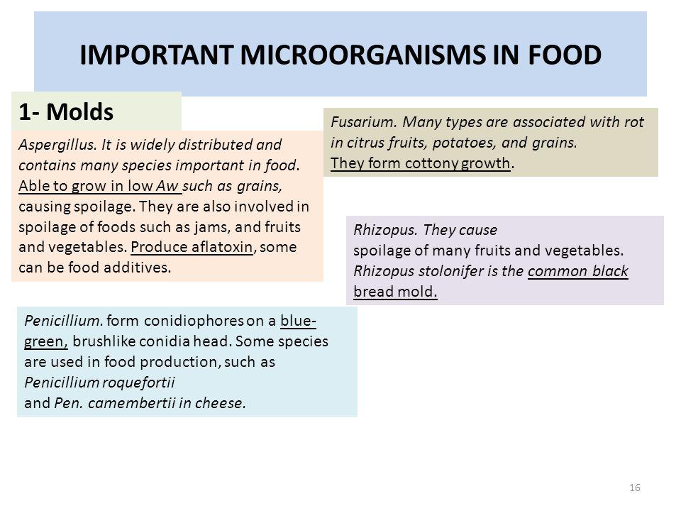 IMPORTANT MICROORGANISMS IN FOOD