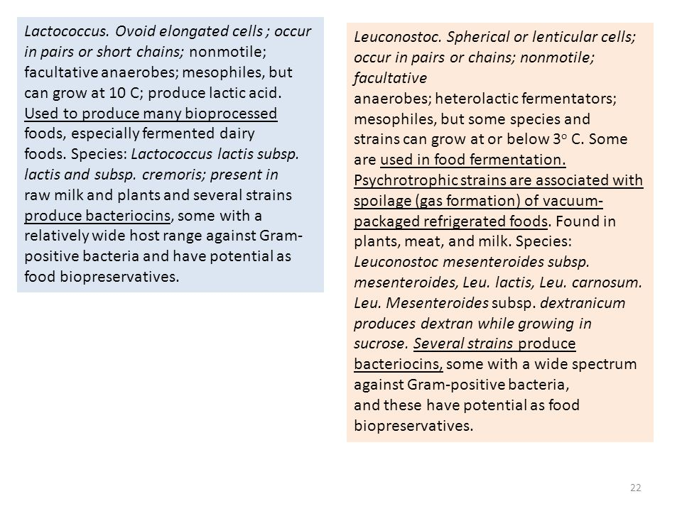 Lactococcus. Ovoid elongated cells ; occur in pairs or short chains; nonmotile; facultative anaerobes; mesophiles, but can grow at 10 C; produce lactic acid. Used to produce many bioprocessed foods, especially fermented dairy