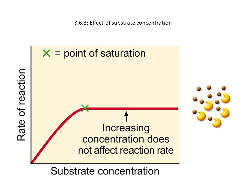 3.6.3: Effect of substrate concentration