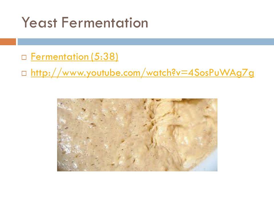 Yeast Fermentation Fermentation (5:38)