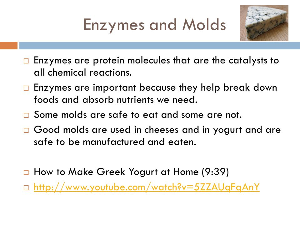 Enzymes and Molds Enzymes are protein molecules that are the catalysts to all chemical reactions.
