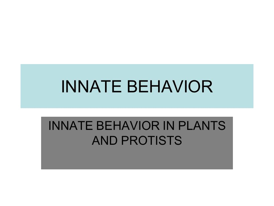 INNATE BEHAVIOR IN PLANTS AND PROTISTS