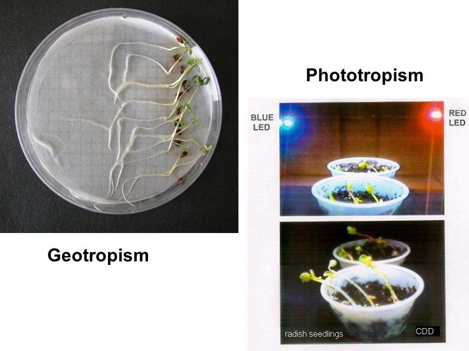 Phototropism Geotropism