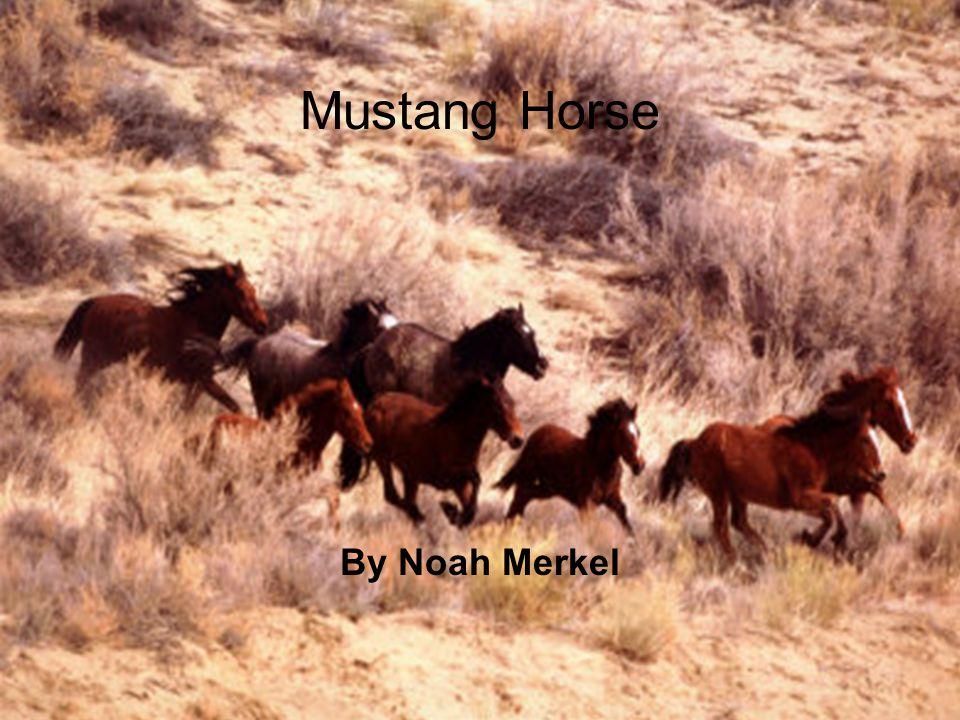 Mustang Horse By Noah Merkel