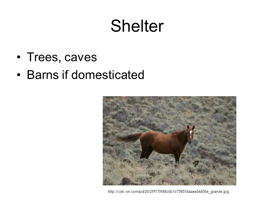 Shelter Trees, caves Barns if domesticated