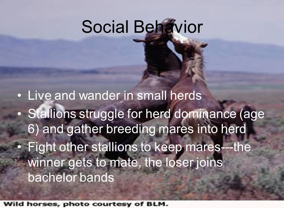Social Behavior Live and wander in small herds