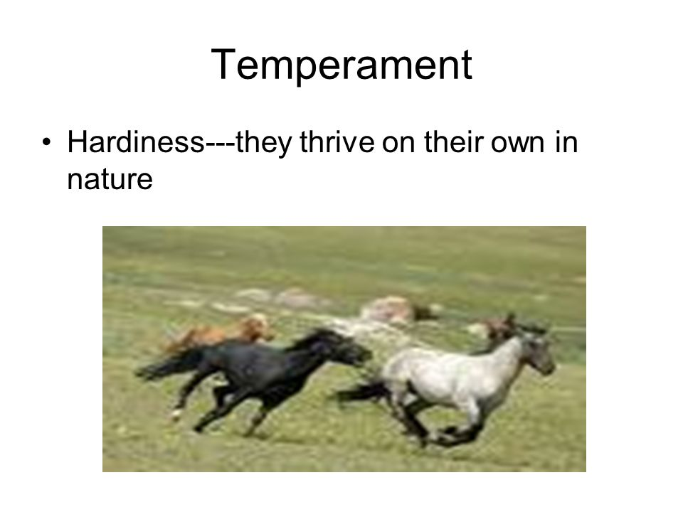 Temperament Hardiness---they thrive on their own in nature