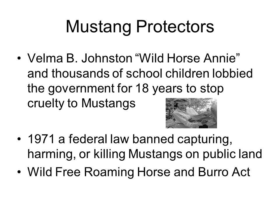 Mustang Protectors