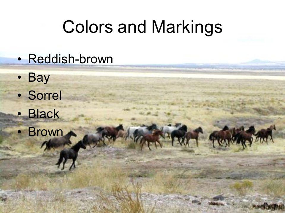 Colors and Markings Reddish-brown Bay Sorrel Black Brown