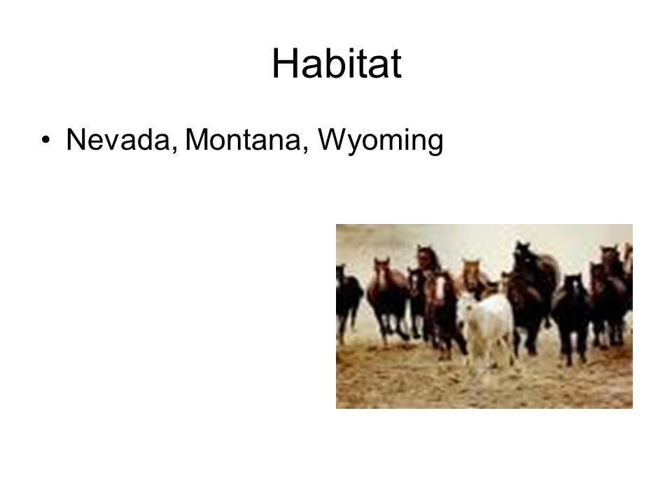 Habitat Nevada, Montana, Wyoming