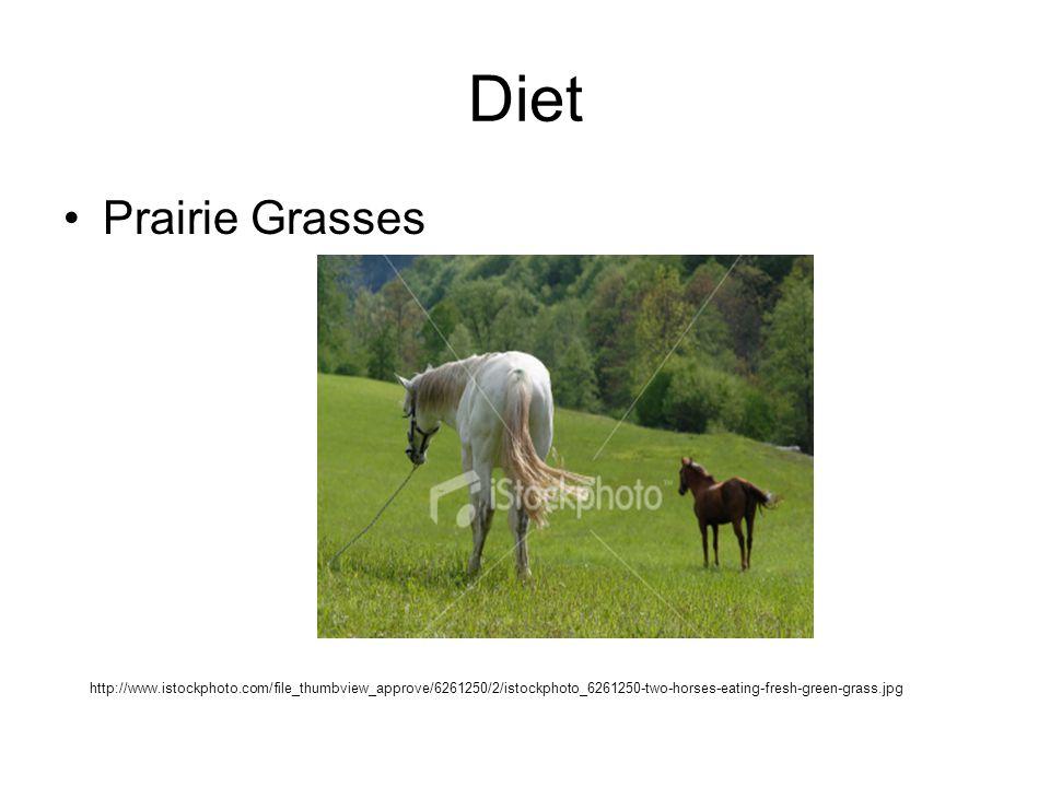 Diet Prairie Grasses.