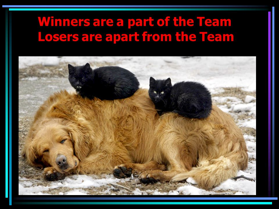 Winners are a part of the Team Losers are apart from the Team