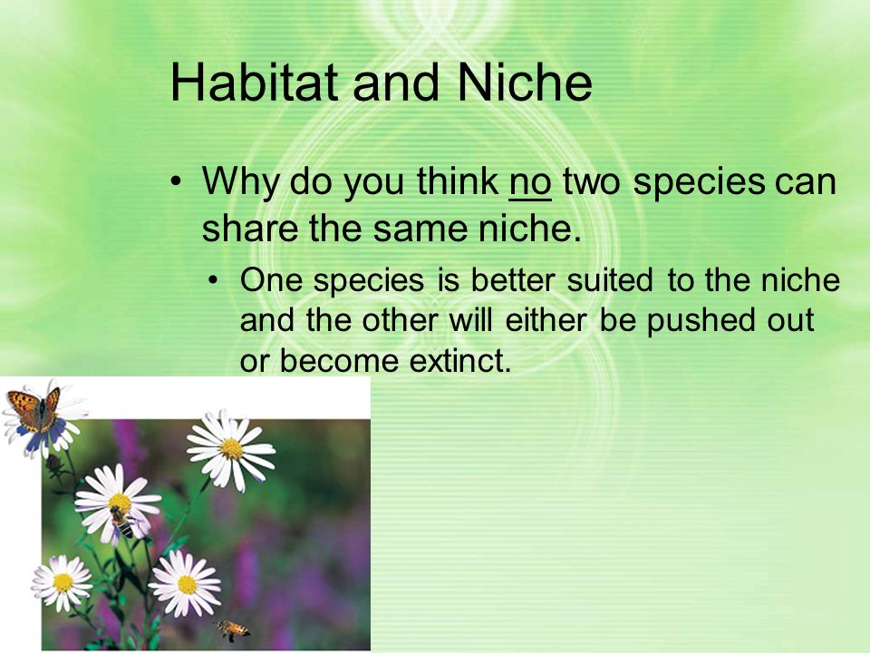 Habitat and Niche Why do you think no two species can share the same niche.