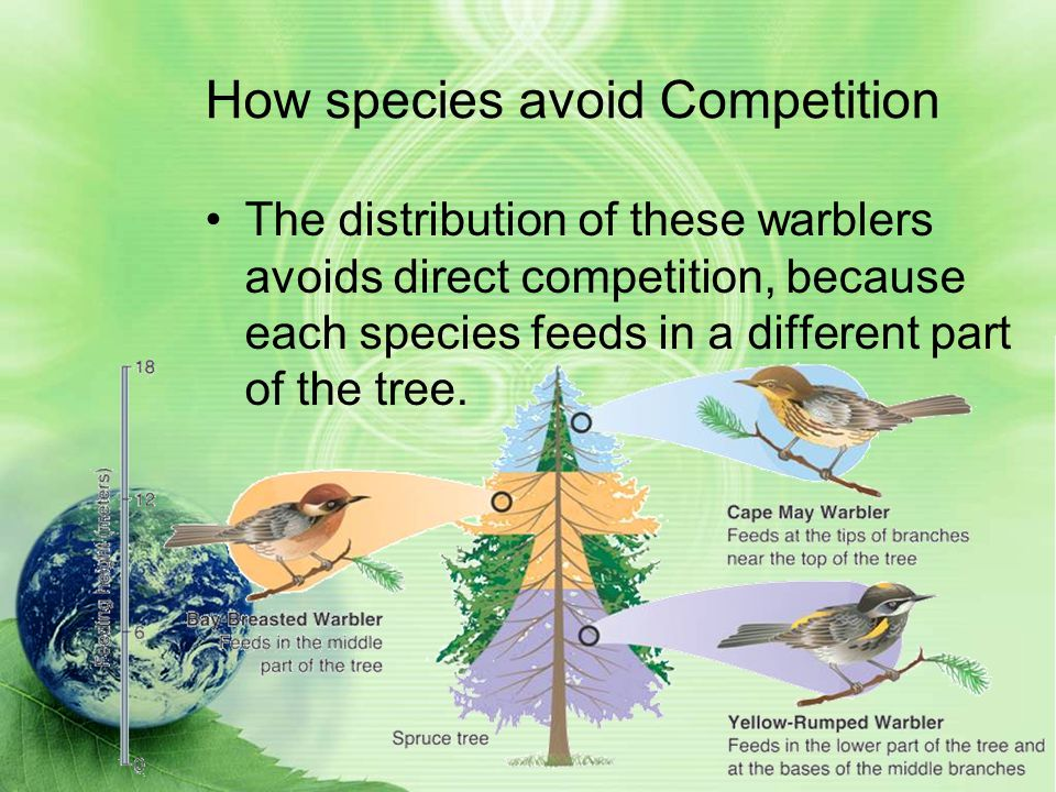 How species avoid Competition