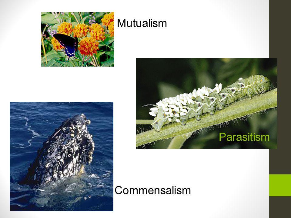 Mutualism Parasitism Commensalism