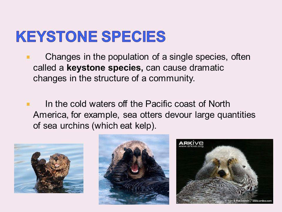 Keystone Species