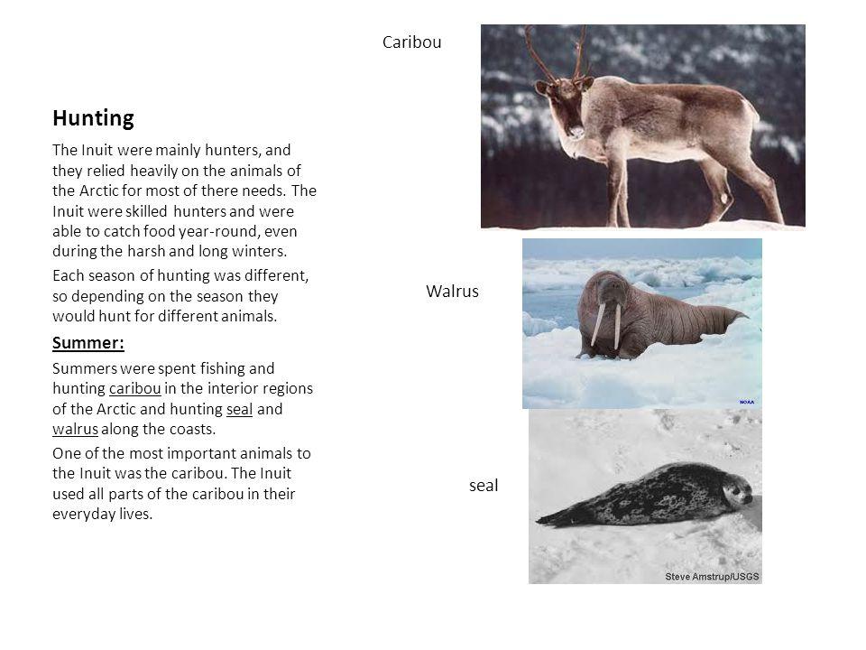 Hunting Caribou Walrus seal Summer: