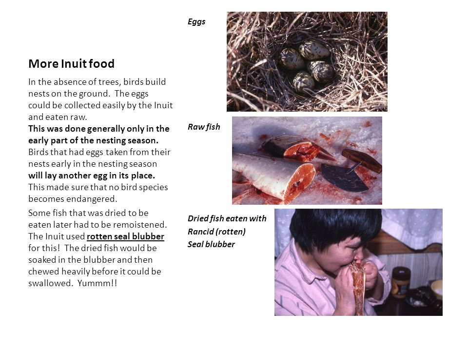 More Inuit food Eggs Raw fish Dried fish eaten with Rancid (rotten) Seal blubber