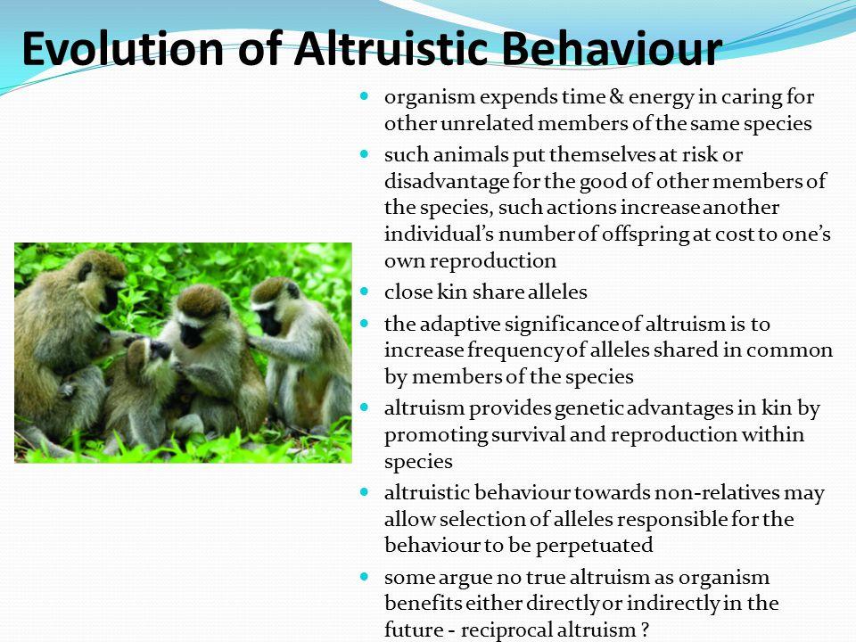Evolution of Altruistic Behaviour