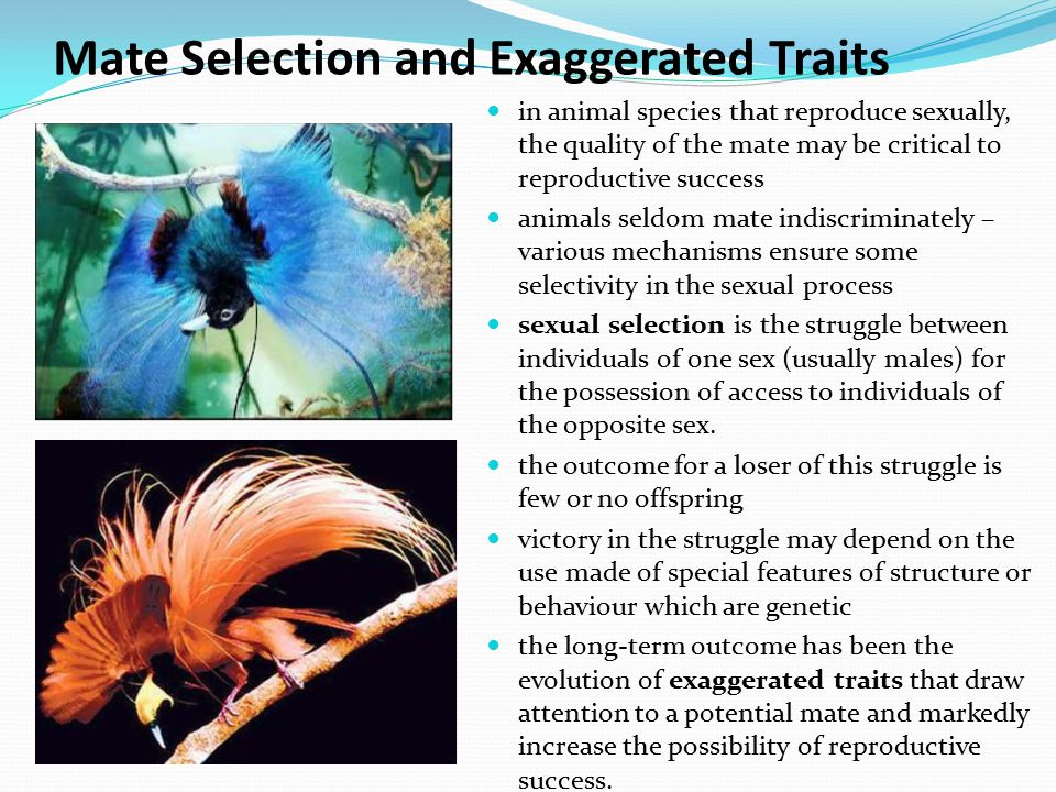 Mate Selection and Exaggerated Traits