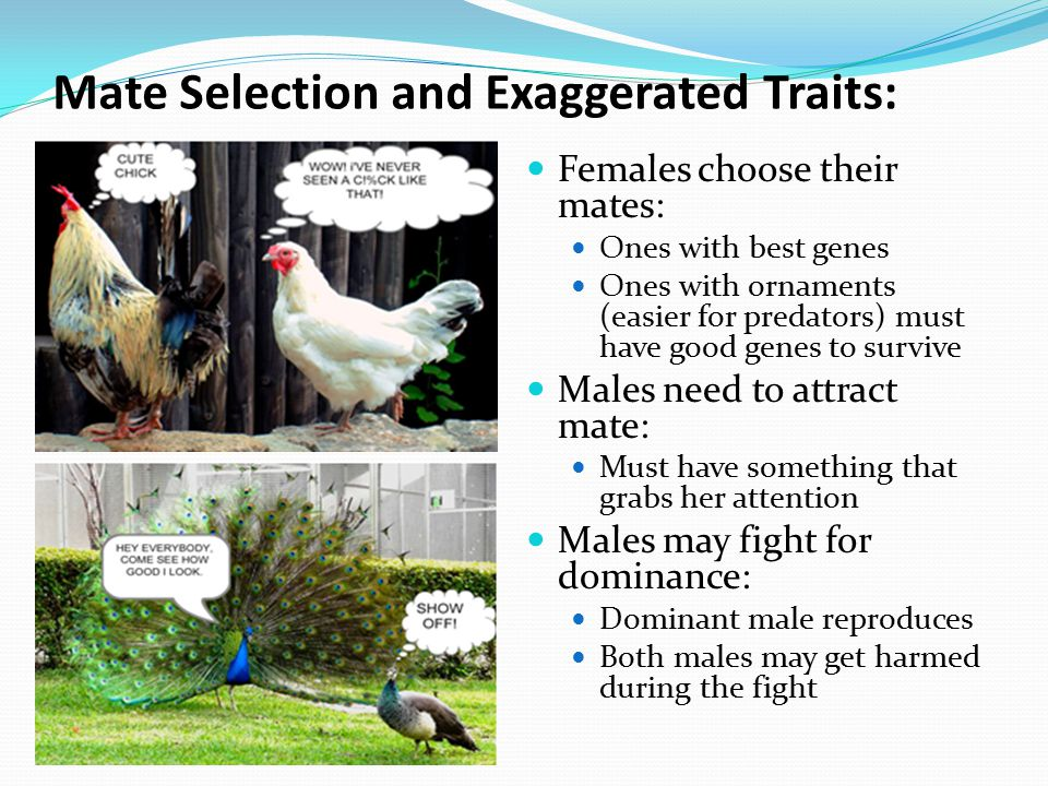Mate Selection and Exaggerated Traits: