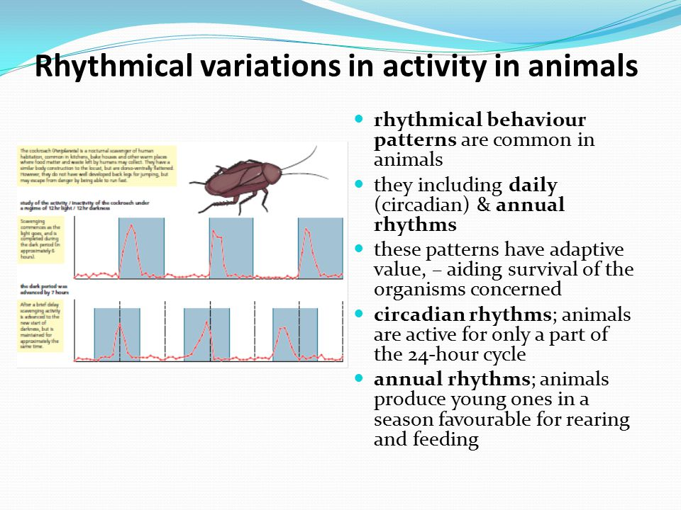 Rhythmical variations in activity in animals