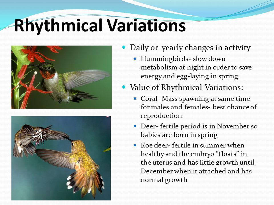 Rhythmical Variations