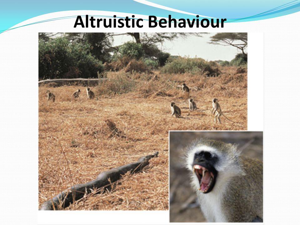 Altruistic Behaviour