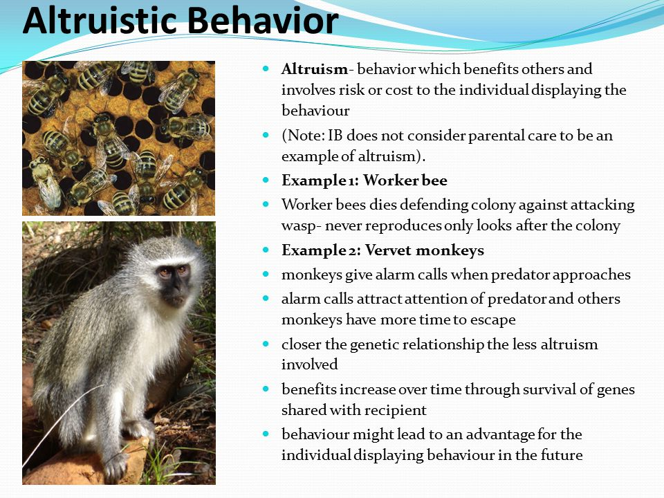 Altruistic Behavior Altruism- behavior which benefits others and involves risk or cost to the individual displaying the behaviour.