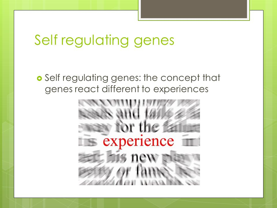 Self regulating genes Self regulating genes: the concept that genes react different to experiences